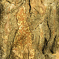 Tree Self Reflections In Bark by LeeAnn McLaneGoetz McLaneGoetzStudioLLCcom
