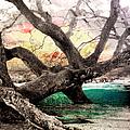 Tree Series 01 by Carlos Diaz