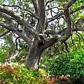 Tree Series 48 by Carlos Diaz