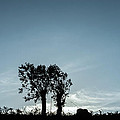 Tree Silhouette II by Marco Oliveira