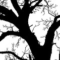 Tree Silhouette  by Jim Smith