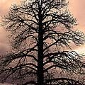 Tree Silhouette by Laurel Powell