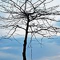 Tree Silhouette by Linda Kerkau