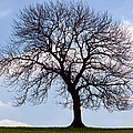 Tree Silhouette by Natalie Kinnear