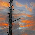 Tree Silhouette by Paul Freidlund