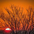 Tree Silhouetted By Irish Sunrise by James Truett