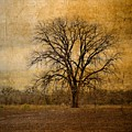 Tree Spirit by Gary Richards