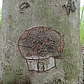 Tree Spirit by Robert Nickologianis