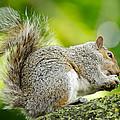 Tree Squirrel by Ellen Henneke