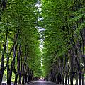 Tree Street 1 by Matt Swinden