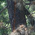 Tree Struck By Lightning by Paul Shoaf