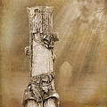 Tree Stump 2 The Forgotten Series 15 by Cynthia Woods