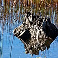 Tree Stump And Reeds by Stuart Litoff