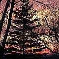 Tree Sunset by Wayne Williams
