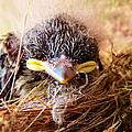 Tree Swallow Fledglings by Art Dingo