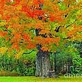 Tree Swing by Terri Gostola