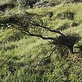 Tree by Tadeusz Jurgielewicz