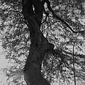 Tree Tangle by Theresa Davis