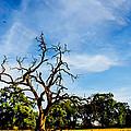 Tree Timestack by La Rae  Roberts