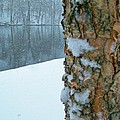 Tree Trunk Bark And River In Snowfall by Rory Cubel