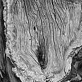 Tree Trunk by Hugh Smith