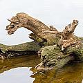 Tree Trunk In Water by Alain De Maximy