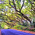 Tree Tunnel On The Big Island by Dominic Piperata