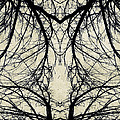 Tree Veins by Natasha Marco