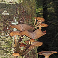 Tree With A Fungus by Tikvah's Hope