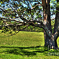 Tree With A Swing by Kaye Menner