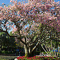 Tree With Pink Flowers by Jatinkumar Thakkar