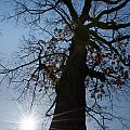 Tree With Sun by Mats Silvan