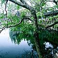 Tree by HweeYen Ong