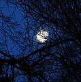 Treed Moon by Joseph Yarbrough