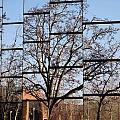 Treeflection by Rick Locke