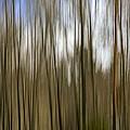 Trees #2 by David Stone