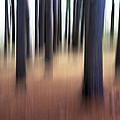 Trees #3 by David Stone