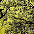 Trees Abstarct Yellow by Nishanth Gopinathan