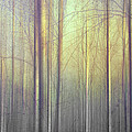 Trees Abstraction by Mal Bray