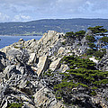Trees Amidst The Cliffs In California's Point Lobos State Natural Reserve by Bruce Gourley