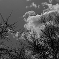 Trees And Clouds 3 Bw by Mary Bedy
