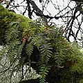 Trees And Ferns And Moss Ecosystem by Lizbeth Bostrom
