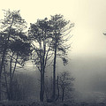 Trees And Fog At Castle Hill by David Stone