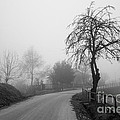 Trees And Fog by Stefano Piccini