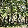 Trees And Knees by Carol  Bradley