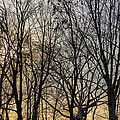 Trees And Late Afternoon Light by Robert Ullmann