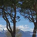 Trees And Snow-capped Mountain by Mats Silvan