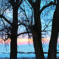 Trees And Sunset by Linda Kerkau