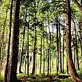 Trees by Angela Garrison