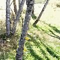 Trees At A Picnic by Flamingo Graphix John Ellis